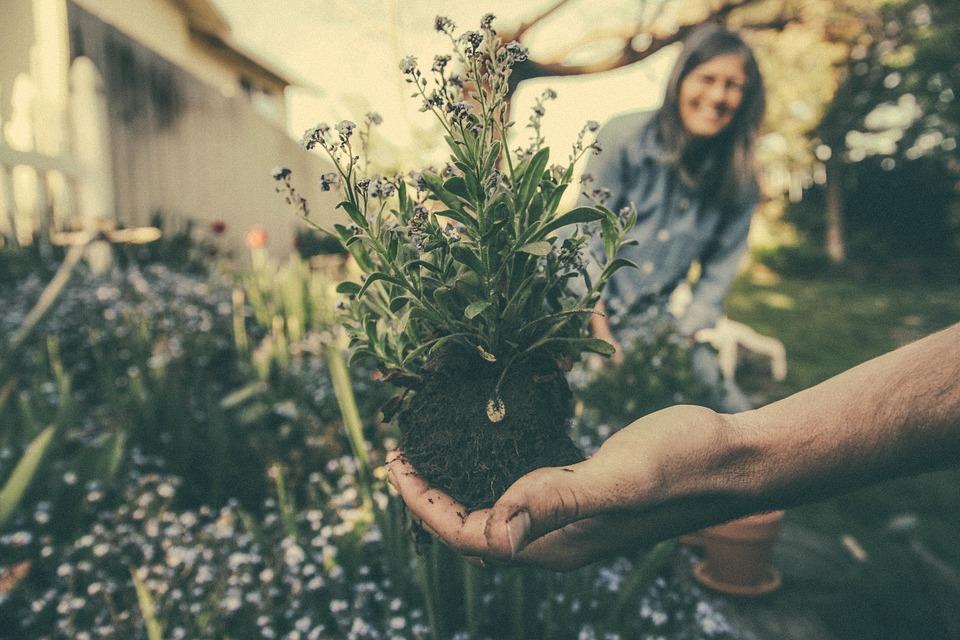 Cara dan Tips Memulai Bisnis Florist